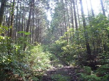 P1250600植林帯.JPG