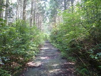 P1250601舗装林道.JPG