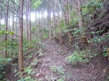 P1250618明瞭な山道.JPG