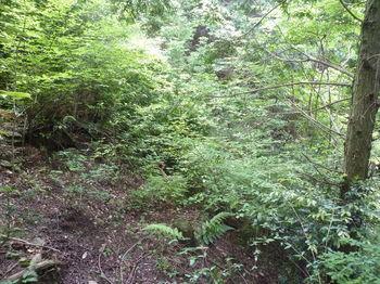 P1250627灌木が被る.JPG