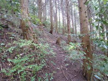 P1250629ヒノキ林斜面の踏み跡.JPG