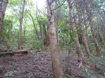 P1250633植林が終る.JPG
