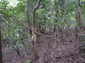 P1250635雑木疎林をトラバース.JPG