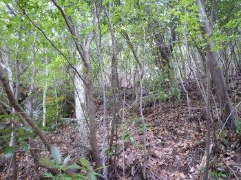 P1250653大岩右の雑木疎林斜面を登る.JPG