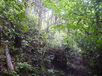 P1250726植林沿いの山道.JPG