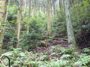 P1250733植林谷・やや平坦地.JPG