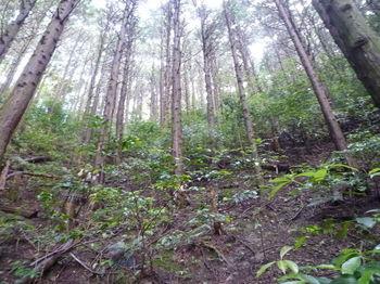 P1250741ヒノキ植林の小谷.JPG