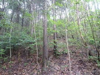 P1250746左ヒノキ植林境.JPG