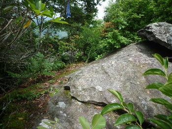 P1250760展望岩手前の岩(マムシの住処).JPG