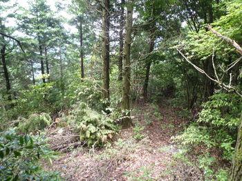 P1250770左植林境・伐採木.JPG
