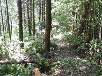 P1250772植林境.JPG