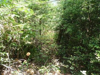 P1250775灌木伐採尾根.JPG
