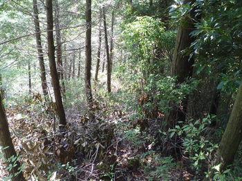 P1250777灌木伐採尾根.JPG