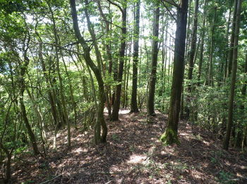 P1250781直進方向の植林境.JPG