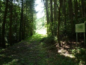 P1250810右の林道.JPG