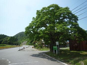P1250817ハゼの木・県道出合.JPG