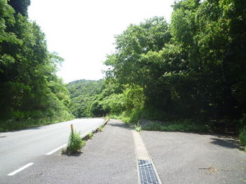 P1250819杉ヶ峠・旧道分岐.JPG