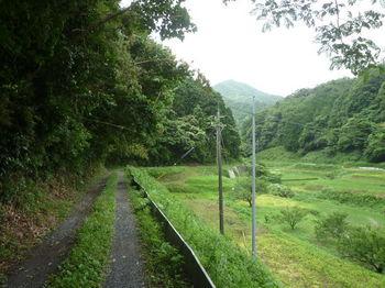 P1250848林道.JPG