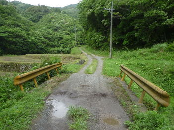 P1250849コン橋.JPG