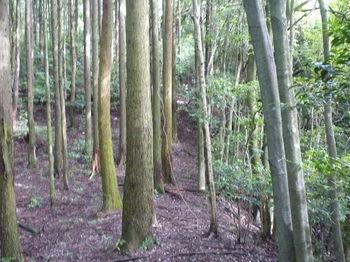 P1250861植林沿い.JPG