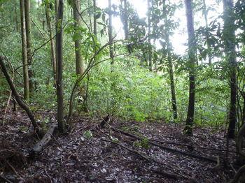 P1250867植林境尾根と合流.JPG