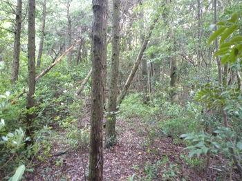P1250875植林境.JPG