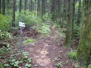 P1250929白糸の滝新道コース合流点・道標.JPG