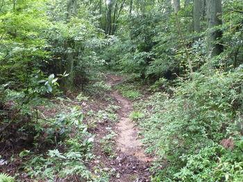 P1250931植林境の登山道.JPG