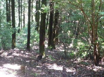 P1250964植林境の下り.JPG