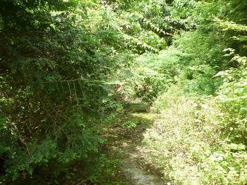 P1250985灌木が被る舗装林道.JPG