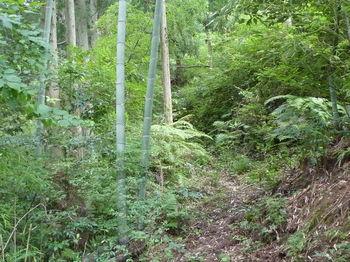 P1260115谷沿い山道.JPG