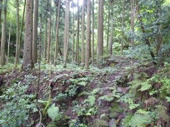 P1260117山道.JPG