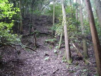 P1260120植林境切り開き斜面.JPG