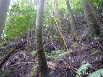 P1260124左植林斜面.JPG