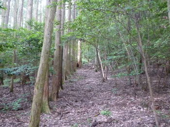 P1260135植林境.JPG