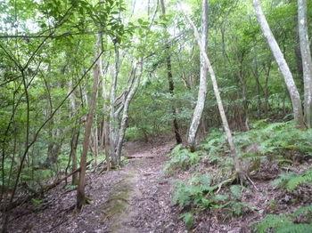 P1260137雑木林沿い.JPG