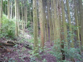 P1260144右植林斜面へ逃げる.JPG