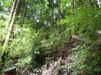 P1260146植林斜面を登る.JPG