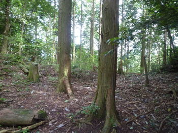 P1260150植林鞍部⑤へ出る.JPG