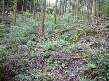 P1260153踏み跡をたどり左の谷を詰める.JPG