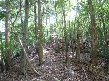 P1260155 350m尾根鞍部へ出る・植林境の切り開き(右方向).JPG