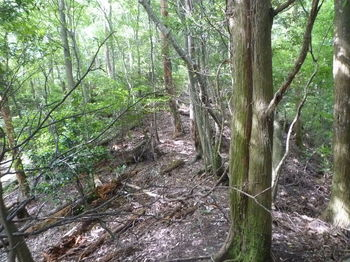 P1260156植林境の切り開き(左方向).JPG