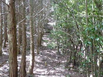 P1260169ヒノキ植林境.JPG