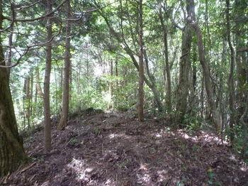 P1260178植林境.JPG