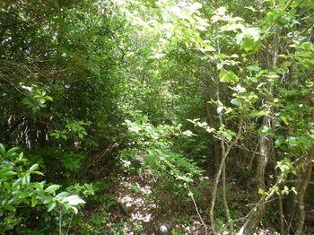 P1260183灌木.JPG