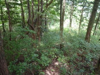 P1260191植林境・灌木.JPG