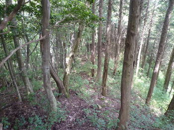 P1260194植林境.JPG