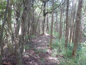 P1260198植林境.JPG
