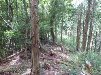 P1260201植林境.JPG