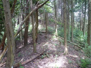 P1260202植林境鞍部.JPG